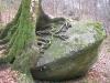 arbre et rocher